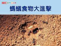 螞蟻食物大進擊 [有聲書]
