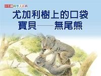 尤加利樹上的口袋寶貝 [有聲書]:無尾熊