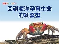 回到海洋孕育生命的紅螯蟹 [有聲書]