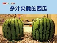 多汁爽脆的西瓜 [有聲書]