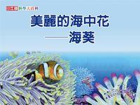 美麗的海中花 [有聲書]:海葵