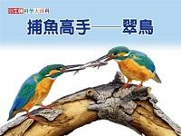 捕魚高手 [有聲書]:翠鳥
