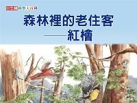 森林裡的老住客 [有聲書]:紅檜