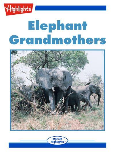 Elephant grandmothers [有聲書]