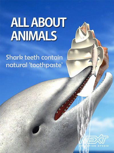 Shark teeth contain natural 'toothpaste'